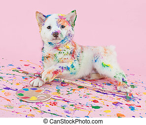 Painted Pooch - Cute Shiba Inu puppy that looks like she had...