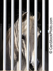 inmate - horse in barn