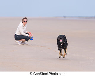 Dog running on teh beach