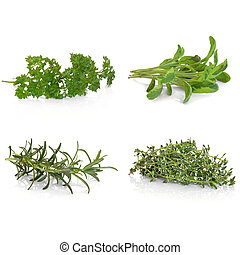 Parsley Sage Rosemary and Thyme