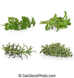 persil, sauge, romarin, thym
