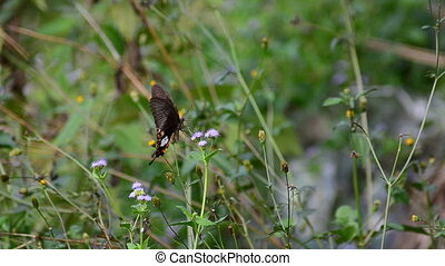 Butterfly and flower grass in the wind