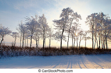 Forest with deciduous trees in winter landscape, snow