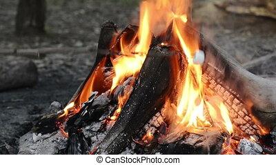 Roasting Marshmallows - Person roasts marshmallows on a...