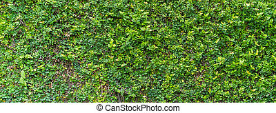 Green Bush Seamless Tileable Texture - Green Bush Seamless...