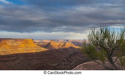 Small tree Canyon at Sunset - Canyonlands National Park High...