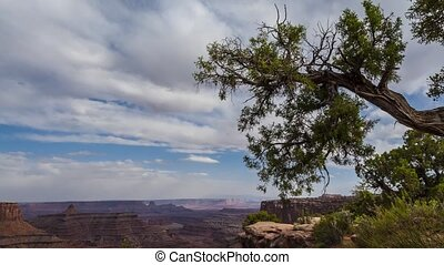 Timelapse Tree over the canyon - Beautiful Canyon-lands...