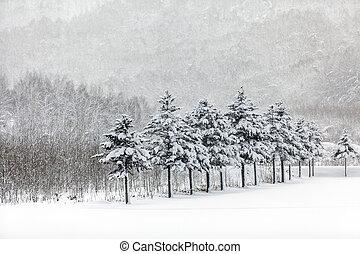 Winter scene of leafless trees