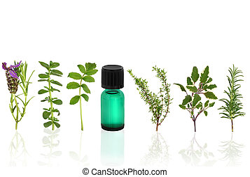 Herbal Therapy - Herb and flower leaf selection with an...