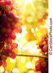Art Ripe grapes on a vine with bright sun background...
