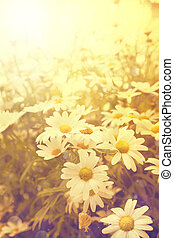 art vintage flowers background