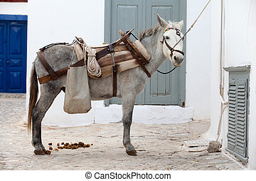 Working donkey - A working donkey on the Greek island of...