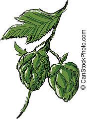 green hop - hand drawn, sketch illustration of hop