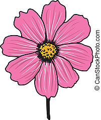 cosmos aster