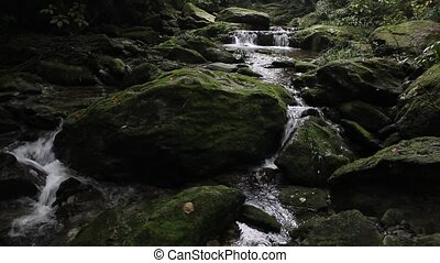 The forest of rocks and streams - The green moss covered...