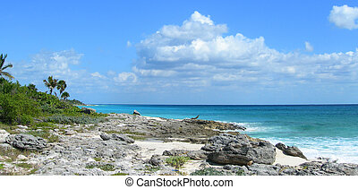 Riviera Maya beach - Caribbean beach background at the...