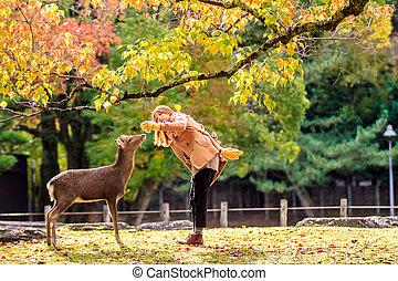 Visitors feed wild deer in Nara - NARA, JAPAN - Nov 21:...