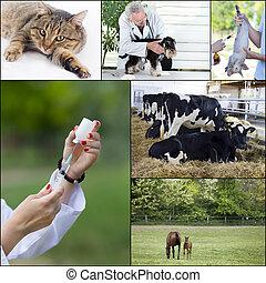 veterinario, cuidado, Colección