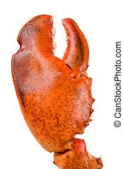 Lobster Claw - Lobster claw with white background