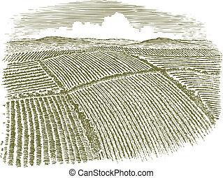 Woodcut Aerial of Field