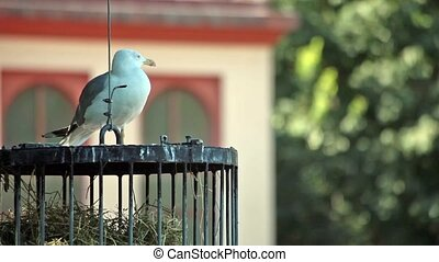 Seagull Resting On Cage - Video clip of seagull resting on a...