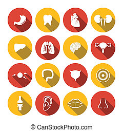 Human Organs Icons - Human organs icons set of heart kidney...
