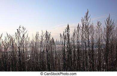 Winter landscape. - Winter landscape in the frozen river...