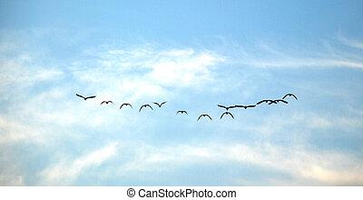 madarak, menekülés