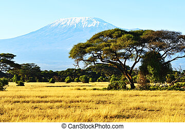 African savannah landscape - Snow on top of Mount...