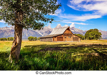 Scenic view of Grand Teton with old wooden farm and tree,...
