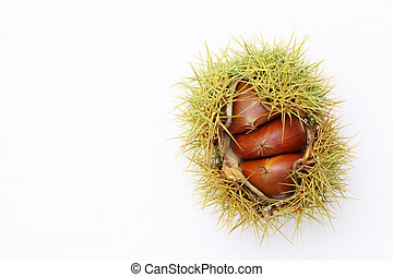 chestnuts bur - fresh chestnuts bur on white background
