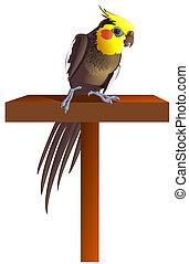 male cockatiel perched - A male cockatiel perched on a...