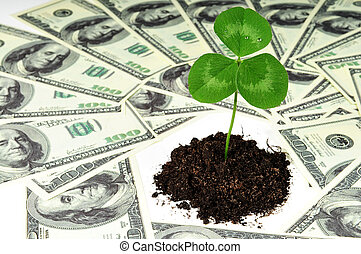 plant in money - Grow new business concept - green clover...
