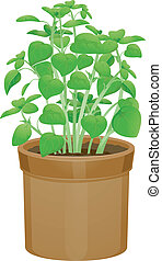 Potted Basil - Illustration Featuring Potted Basils