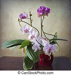 Vintage still life, interior with orchid plant composition