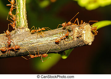 group ant walking on tree