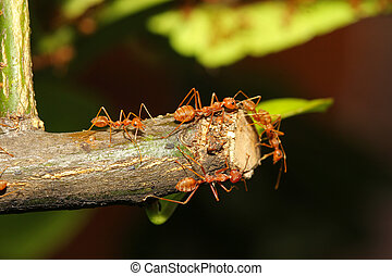 group ant on tree