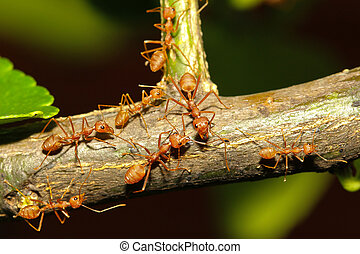 group ant walking on tree - group ant on tree