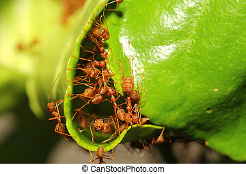 group ant build home from leaf