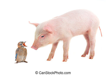 bird and pig - baby bird and pig on a white background...