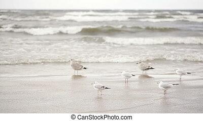 Seagulls on beach - On yellow sand beach flock of seagulls