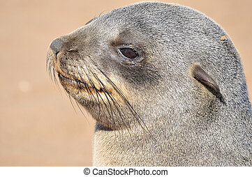 Cape Fur Seal pup at Cape Cross in Namibia