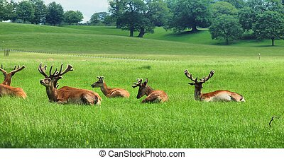 Deers in the UK zoo Travel to the zoo
