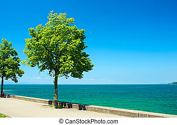 Trees by Lake Constance at Germany - Trees by Lake Constance...