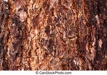 High Res Bark Texture - Abstract High Res Bark Texture...