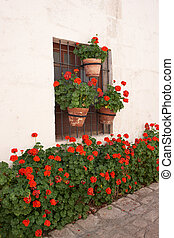 Monasterio de Santa Catalina - Pots of red geraniums lining...