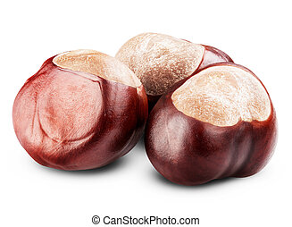 isolated Chestnut on white background Clipping Path