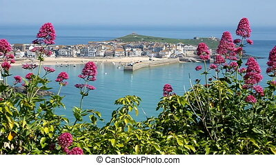 St. Ives harbour wild red Valerian.