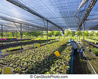Rows of seedlings and young plants in greenhouses.