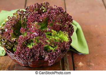 fresh organic purple lettuce (Lollo Rosso)